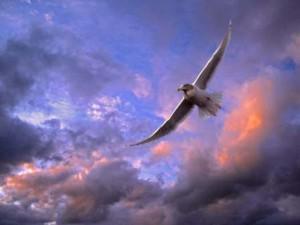 Парящая птица