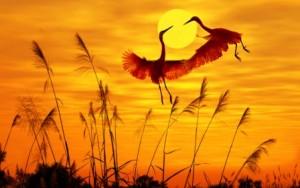 Птица огненная