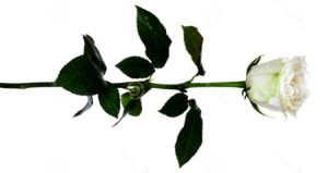 Упаду к тебе розою белою
