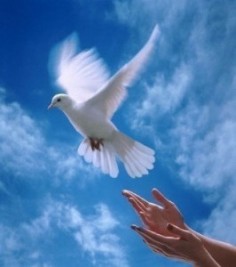 Из рук, как птицу отпускаю